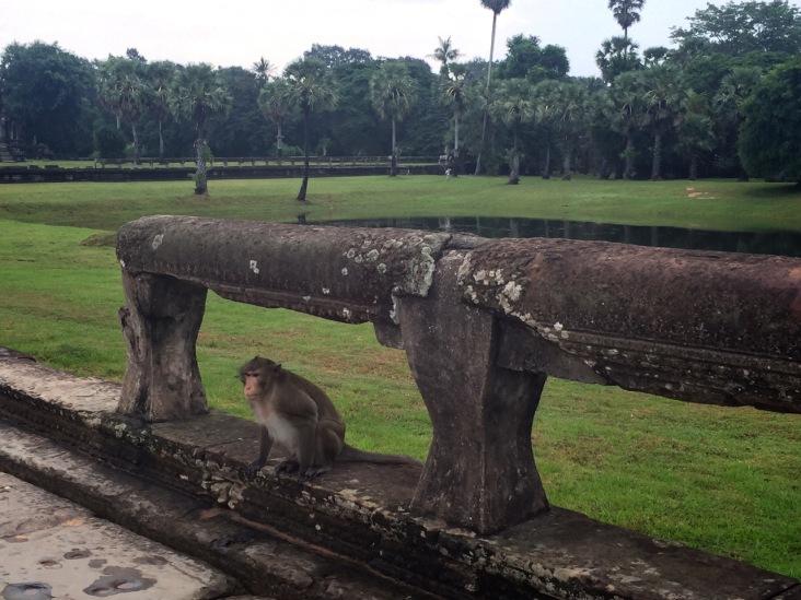 Random monkey